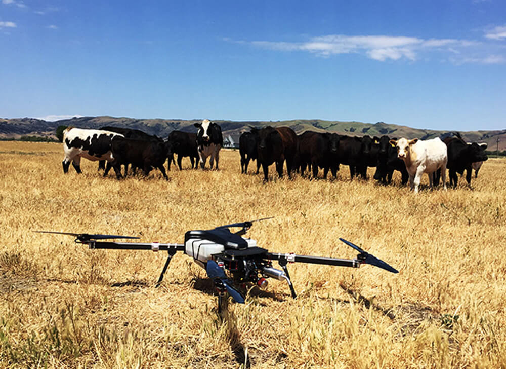 Skyfront Perimeter drone next to cows